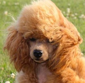 PuppyFind.com,505315