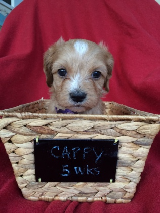 cappy5wk